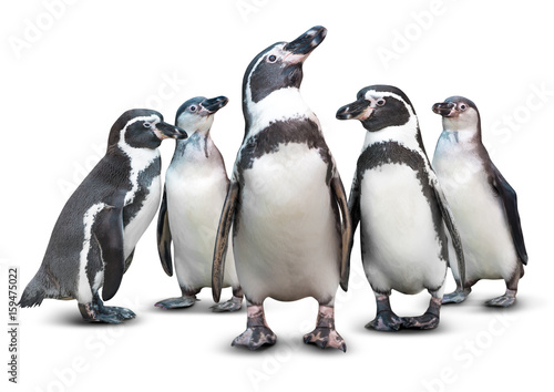 Spoed Fotobehang Pinguin Penguin isolated