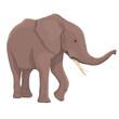 Vector Illustration Elephant Isolated