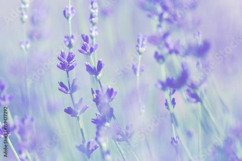 blurred-pale-lavender-summer-background