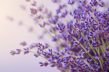 Naklejka Branches of flowering lavender. Can be used as background
