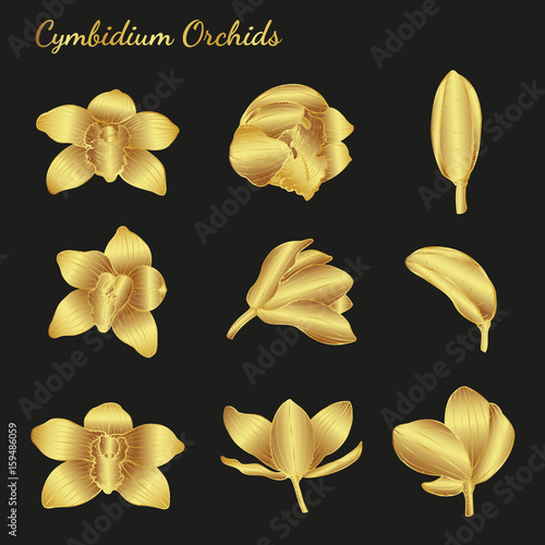 cymbidium-orchids-vector-on-blackbackground-cymbidium