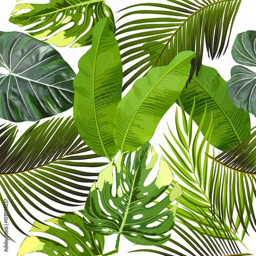 liscie-z-drzewa-palmowego-wzor