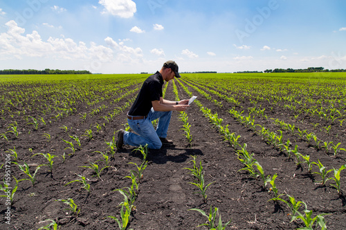 Fototapeta Agronomist Using a Tablet in an Agricultural Field obraz