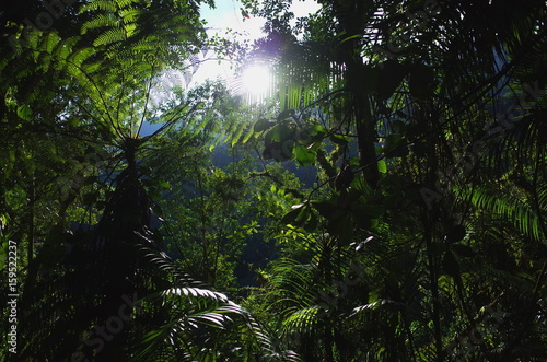 Fotografie, Obraz  In the jungle on the way to Ciudad Perdida (Lost City) in Colombia