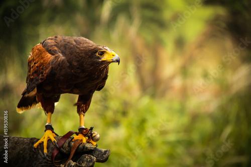Photo  raptor