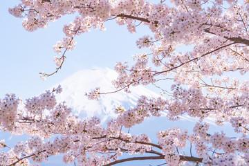 Obraz na Szkle新倉山浅間公園の春2017