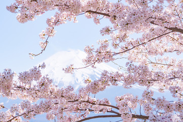Obraz na Plexi新倉山浅間公園の春2017