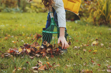 Happy Kid Girl Playing Little Gardener And Picking Leaves In Autumn Garden Outdoor