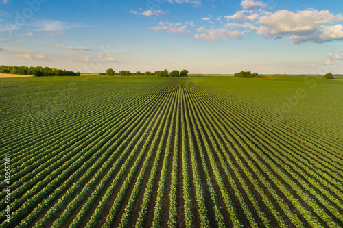 Fotobehang Cultuur Landscape of soybean field in plains