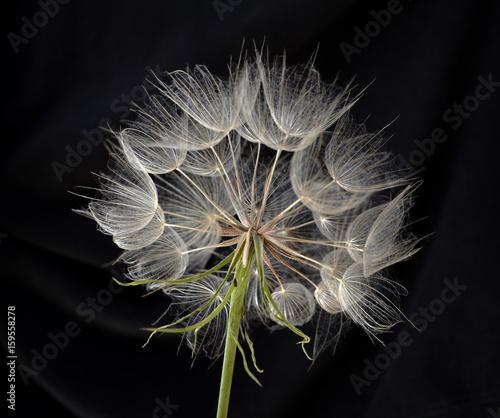 Obraz flower - fototapety do salonu