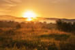 Foggy summer landscape, sun is rising over the golden sunny dewy meadow with trees and motley grass, Carpathians