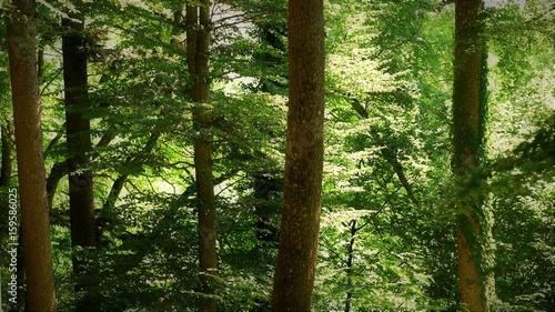 forêt....arbres