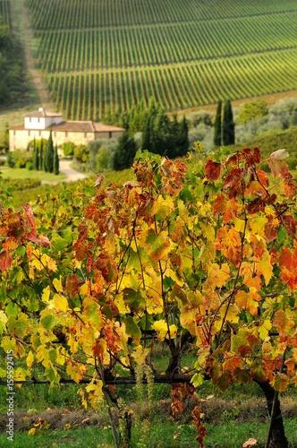 Foto  Farm house and beautiful vineyards in Tuscany, Chianti, Italy