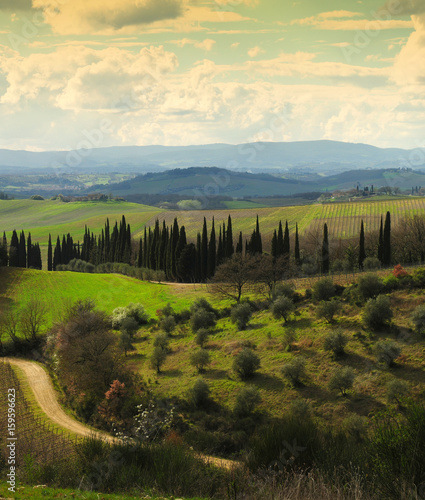 Spoed Fotobehang Zalm Typical Tuscan landscape with Olive Trees and cypress near Castellina in Chianti, Siena. Italy.