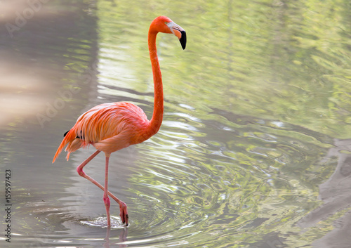 Pink flamingo on a pond in nature Canvas-taulu