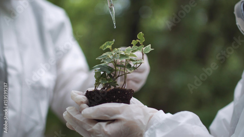Valokuvatapetti Crop biochemists dropping water or fertilize or preparation on small sample of earth with sprout
