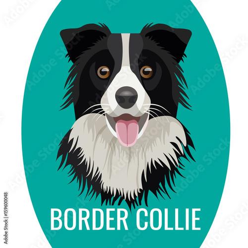 Fényképezés Border Collie pet isolated on white vector illustration