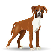 Boxer Dog Full Length Vector I...