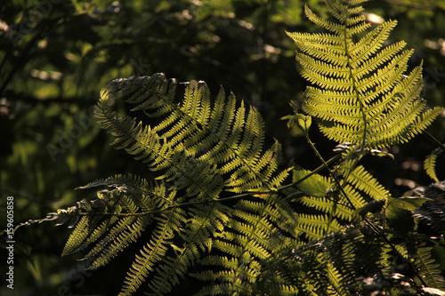 Tuinposter Weg in bos Bosque