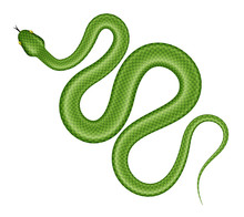 Green Tree Python Vector Illustration. Isolated Tropical Snake On White Background.