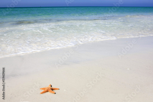 Valokuva  Orange starfish on the white sandy beach at Siesta Key Florida