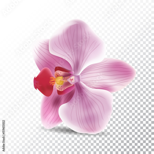 Cuadros en Lienzo Orchid flower isolated on transparent background