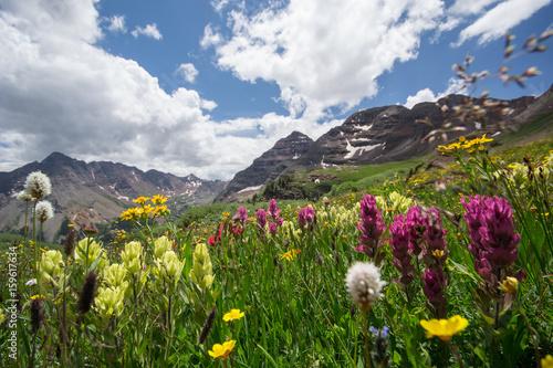 Aspen Snowmass Wildflowers Wallpaper Mural