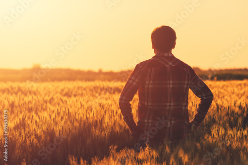 Farmer in ripe wheat field planning harvest activity Wallpaper Mural