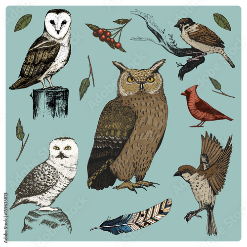 Canvas Prints Owls cartoon hand drawn vector realistic bird, sketch graphic style, set of domestic. turkey and duck. goose and red cardinal. dove and sparrow. raven and feather. typo alba, white owl, barn, long-eared.