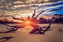 Driftwood Beach, Jekyll Island...