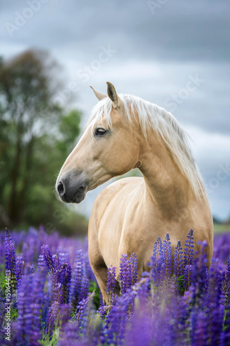 pionowy-portret-konia-palomino