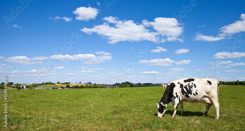 Poster de jardin Vache Vache Prim'Holstein en campagne