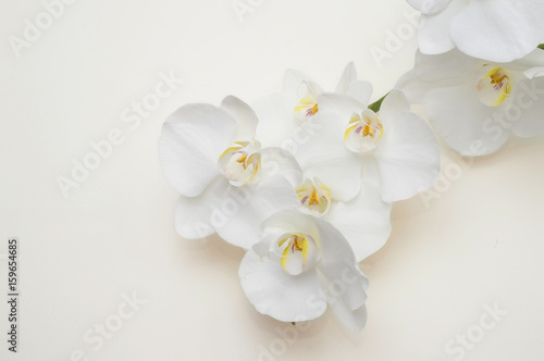 Poster Orchidée romantic branch of white orchid