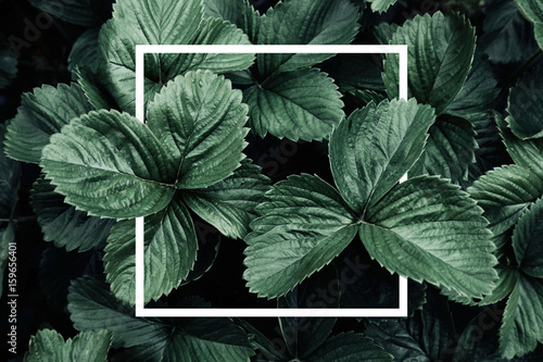 Poster Natuur Deep green leaves, creative layout with white frame, flat lay. Nature concept