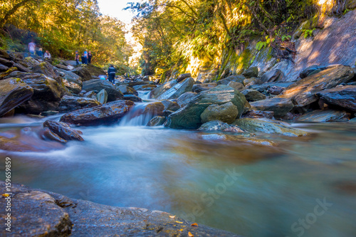 Staande foto Rivier Long Exposure image of a Waterfall in Lush Temperate Rainforest on the West Coast of New Zealand