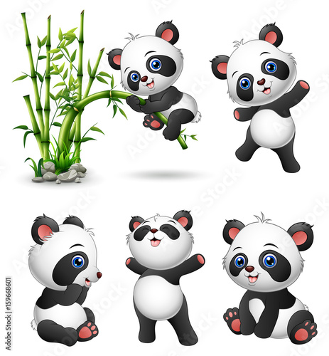 Fototapeta premium Kolekcja cute baby pandy