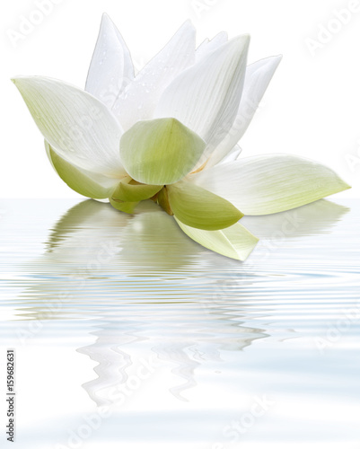 Foto op Canvas Lotusbloem lotus blanc flottant, fond blanc