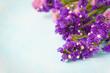 statice sinuata flower