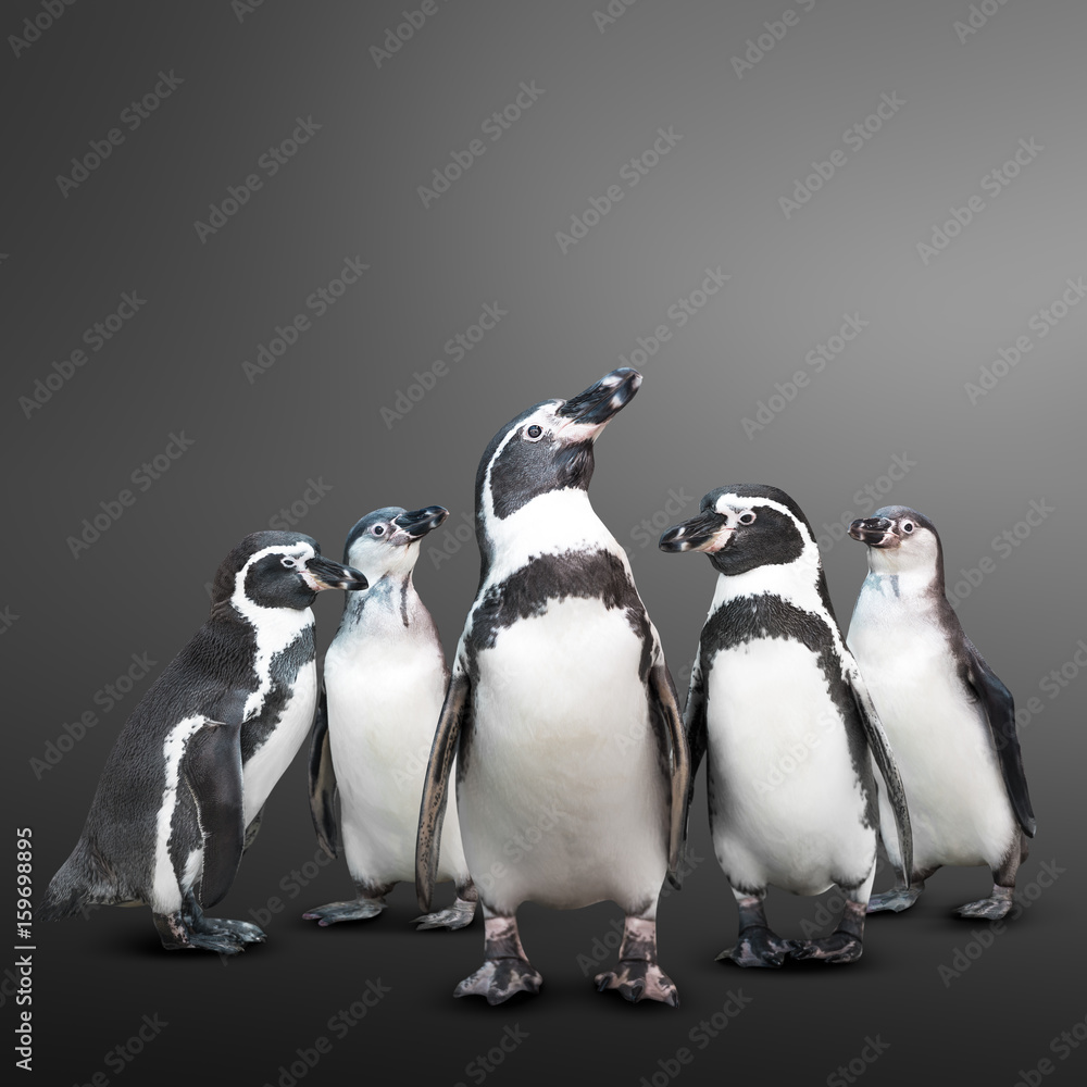 Penguin group