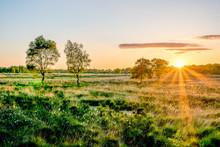 Wierdense Veld Dutch Landscape