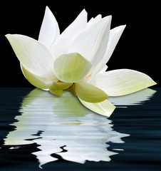 Panel Szklany Podświetlanelotus blanc flottant, fond noir