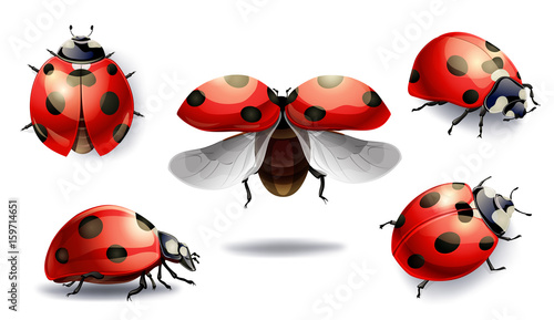 Photo  set of red ladybug isolated on white. vector illustration