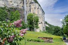 Lilac On Staubbach Waterfall B...