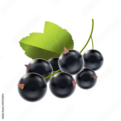 Photo Realistic Detailed Ripe Black Berry Currant. Vector