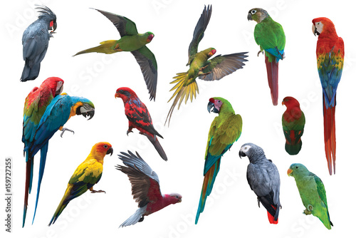 Big set of parrot birds isolated on white background