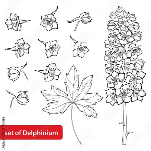 Fotografie, Tablou Vector set with Delphinium or Larkspur