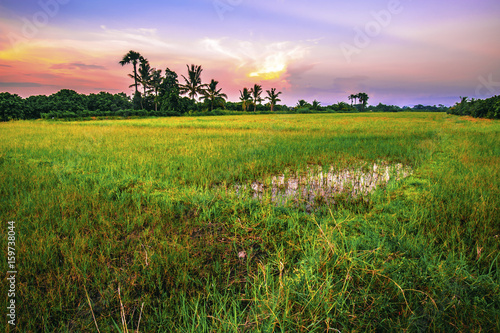 Foto op Plexiglas Purper Landscape of open field in evening time