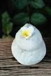 Plumeria flower with beautiful light on rock.