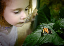 Girl (2-3) Looking At Butterfly On Leaf