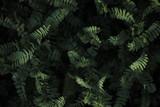 Plants - 159769064